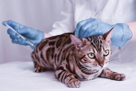 Cat getting a vaccine